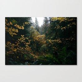 Golden Oregon Forest Canvas Print