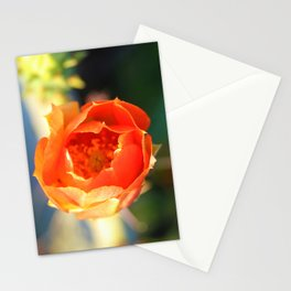 Sunrise Cactus Bloom Stationery Cards