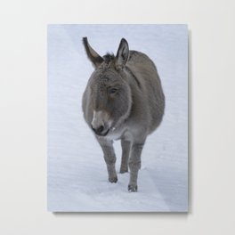 Donkey In The Snow Metal Print