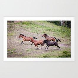 Running Herd Art Print