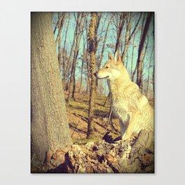 Czech Wolfdog Canvas Print