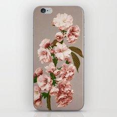 BOTANICAL STILL LIFE - CHERRY BLOSSOMS iPhone & iPod Skin