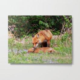 Mama fox & baby Metal Print