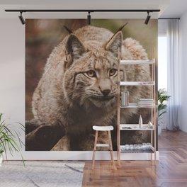 Bob Cat Wall Mural