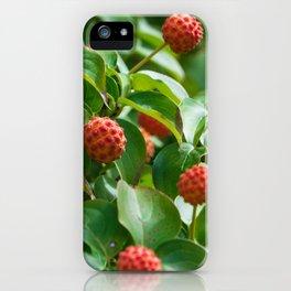 Kousa Dogwood Fruit iPhone Case