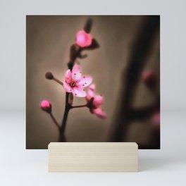 Japanese Cherry Blossom Against Chocolate Background Mini Art Print