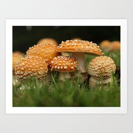 Amanita Colony... Art Print