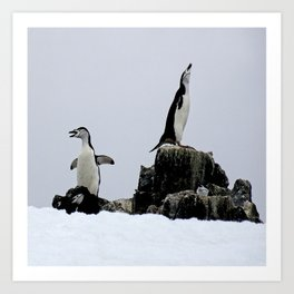 Chinstrap Penguins Art Print
