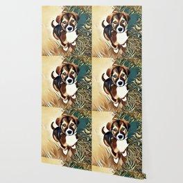 A Saint Bernard Puppy Wallpaper