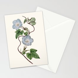 Ivy-Leaved Morning Glory Stationery Cards