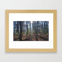 Woods Framed Art Print