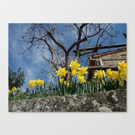 Yellow flowers in a house - Italy Canvas Print