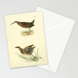 100 Mud lien (Rallus virginianus) Sora Rail (Ortygometra Carolina)13 Stationery Cards