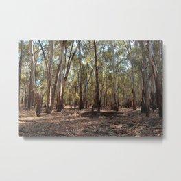 Gumtree Forest Metal Print