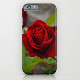 Red Rose by Little Prince iPhone Case