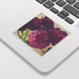 Romantic Ranunculus Sticker