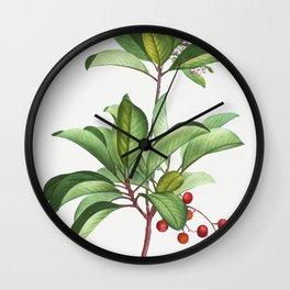 Arbutus andrachne from Traite des Arbres et Arbustes que lon cultive en France en pleine terre (1801 Wall Clock
