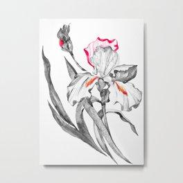 Grey Iris With Red, Sketch Metal Print