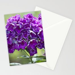 Purple Phlox Stationery Cards