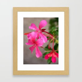 Pretty Pink Flowers In A Hanging Basket Framed Art Print