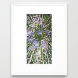 Aspens Sky Framed Art Print