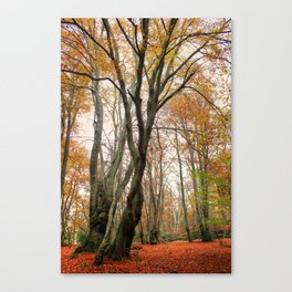 I See Fire Canvas Print