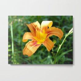 Beautiful Flower Metal Print