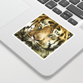 Face of Tiger Sticker