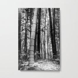 Kyoto Bamboo Metal Print