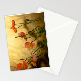 Colorful poppies in evening light Stationery Cards