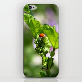 Ladybugs Earn Their Spots iPhone Skin