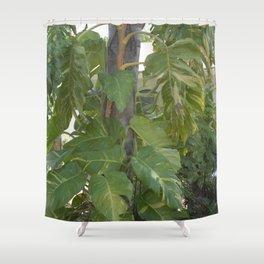 Pothos - Epipremnum aureum Growing up Tree Shower Curtain