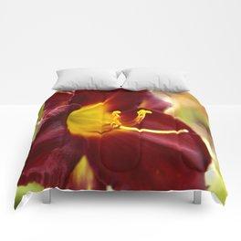 Velveteen Two Comforters