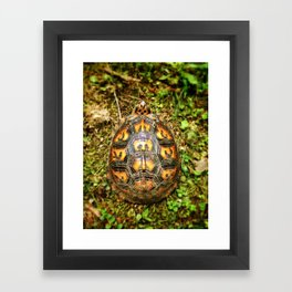 Eastern Box Turtle Shell Pattern  Framed Art Print