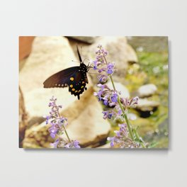 Pipevine Swallowtail Metal Print