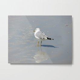 Seagull Shadows Metal Print
