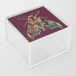 Sphinx Moth Acrylic Box