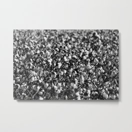 Cotton In Black And White Metal Print
