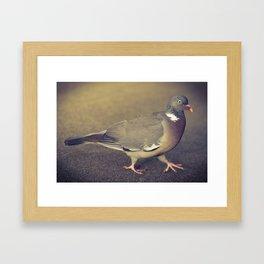 Pigeon Walk Framed Art Print