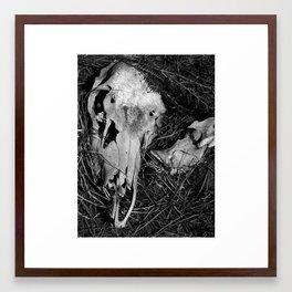 Bear Wallow Framed Art Print