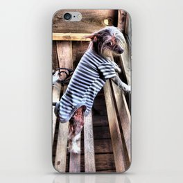 Chinese crested dog on Porch. iPhone Skin