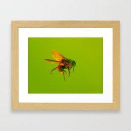 Bugged #11 Framed Art Print