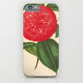 Flower camellia marianna talenti6 iPhone Case