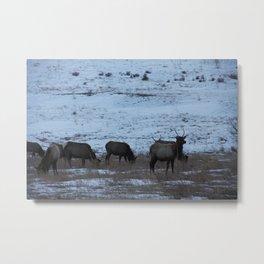 Elk II Metal Print