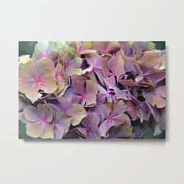 Artistic Autumnal wilt Hydrangea (water colour effect) Metal Print