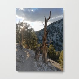 Ancient Bristlecone Pine Forest #2 Metal Print