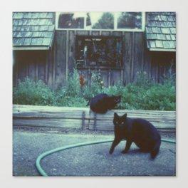 The Black Cats Canvas Print