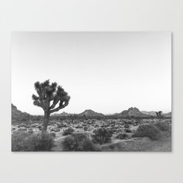 JOSHUA TREE / California Desert Canvas Print
