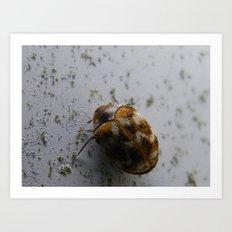 camo beetle Art Print