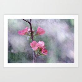 Chaenomeles Japonica Art Print